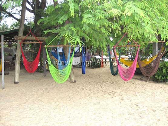 Hängstolar upphängda i träd på stranden
